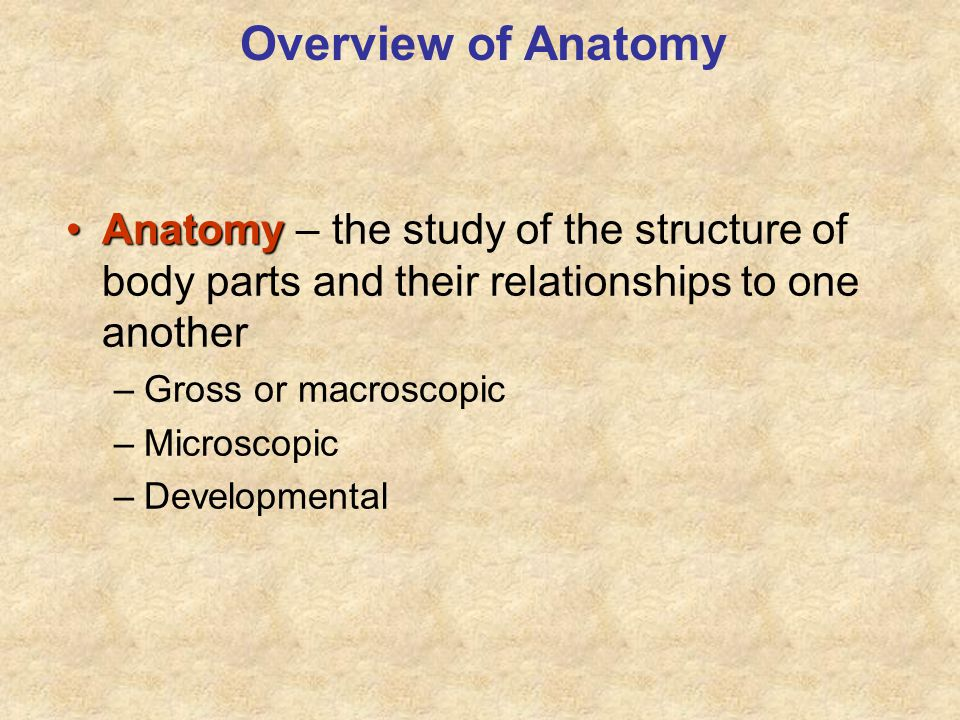 Overview of Anatomy Anatomy – the study of the structure of body parts and their relationships to one another.