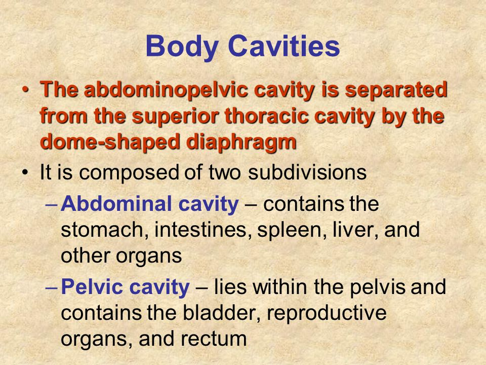 Body Cavities The abdominopelvic cavity is separated from the superior thoracic cavity by the dome-shaped diaphragm.