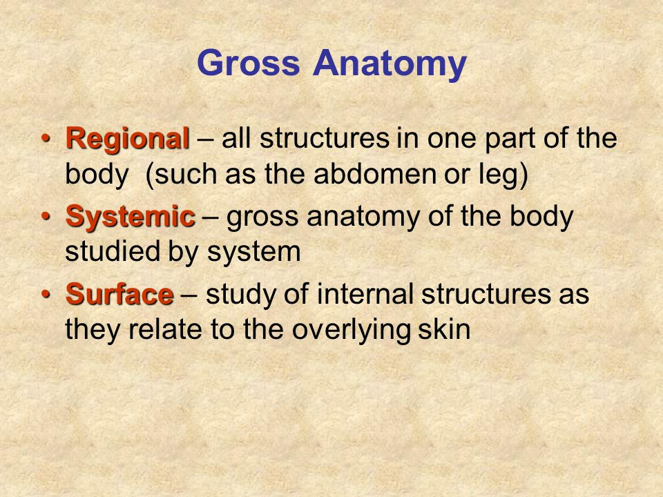 Gross Anatomy Regional – all structures in one part of the body (such as the abdomen or leg) Systemic – gross anatomy of the body studied by system.