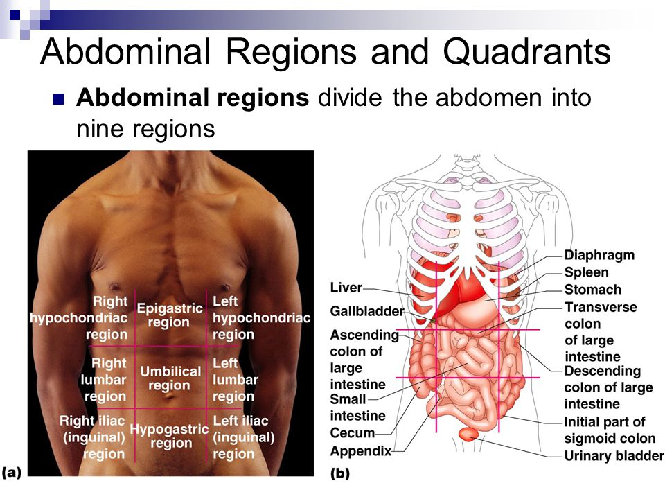 Human Anatomy Introduction Ppt Video Online Download