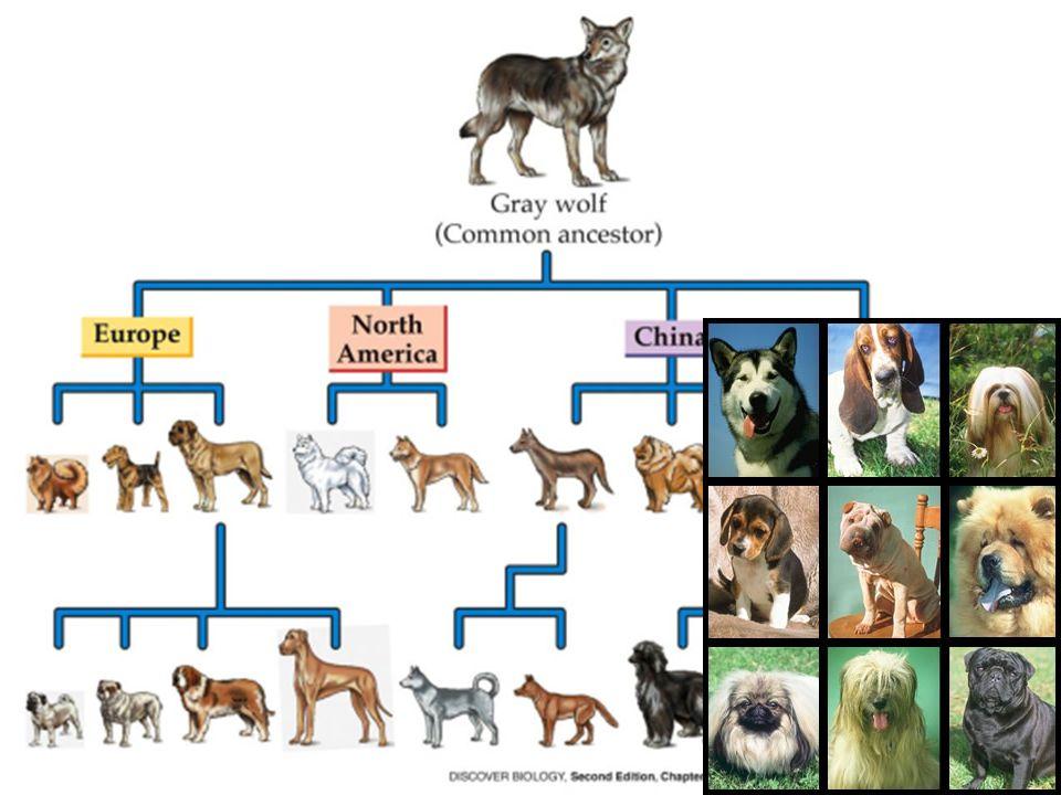 Biological Evolution Ppt Download