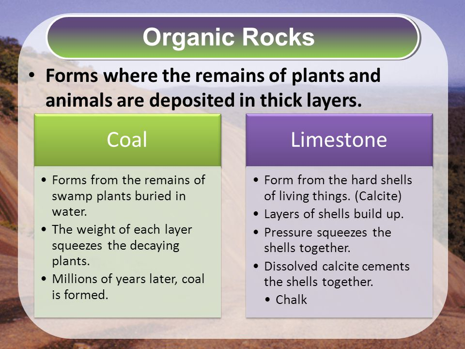 Organic Rocks Forms where the remains of plants and animals are deposited in thick layers. Coal.