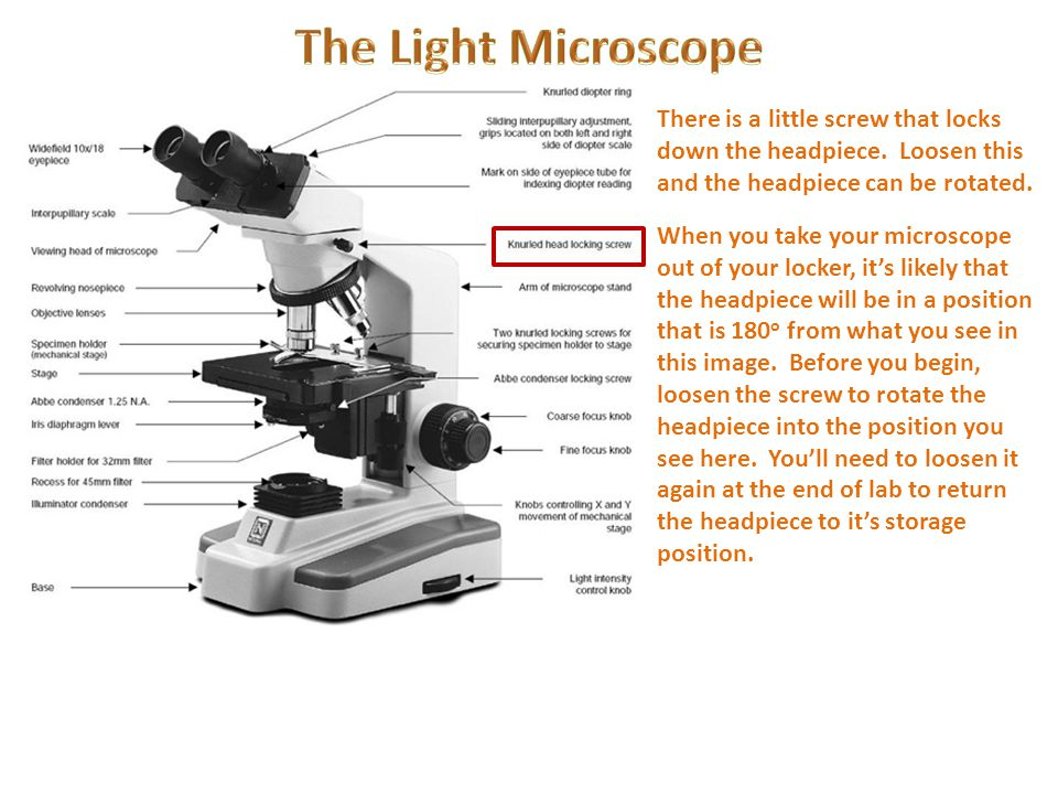 Microscope diagram filter holder wiring diagram for light switch an introduction to light microscopy ppt video online download rh slideplayer com electron microscope diagram blank microscope diagram ccuart Image collections
