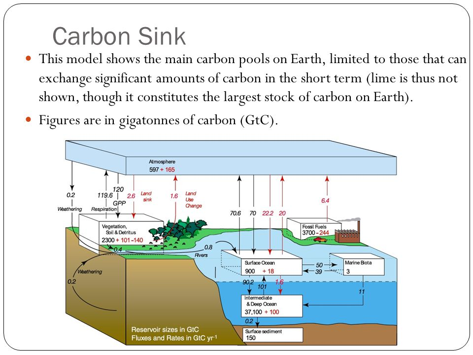 sources and sinks climate change ppt download rh slideplayer com Breakdown of the Carbon Cycle Carbon Sources and Sinks
