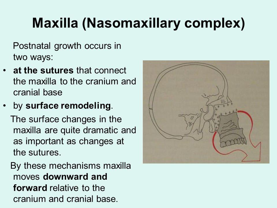 Growth Of The Craniofacial Skeleton Ppt Video Online Download Sympases • fibrocartilage • some elastin 1.symphysis mentalis also: growth of the craniofacial skeleton