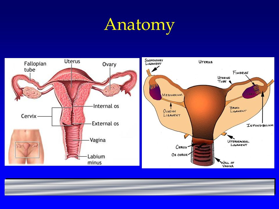 OB-GYN Procedures Operative Sequence - ppt video online download