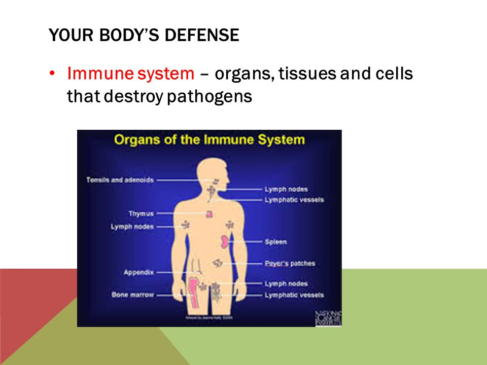 Your body's defense Immune system – organs, tissues and cells that destroy pathogens