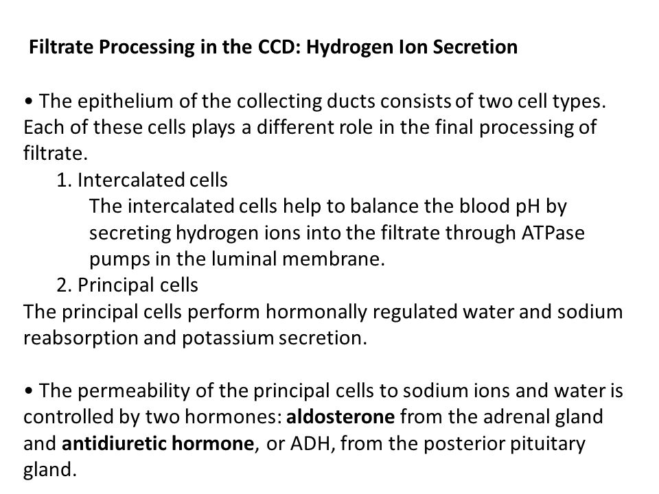 Filtrate Processing in the CCD: Hydrogen Ion Secretion