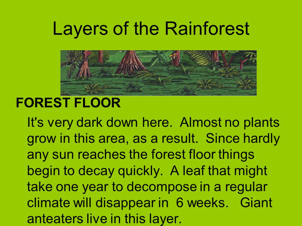 The Rainforest Let S Find Out About The Rainforest What Lives