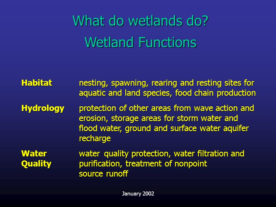 What do wetlands do Wetland Functions