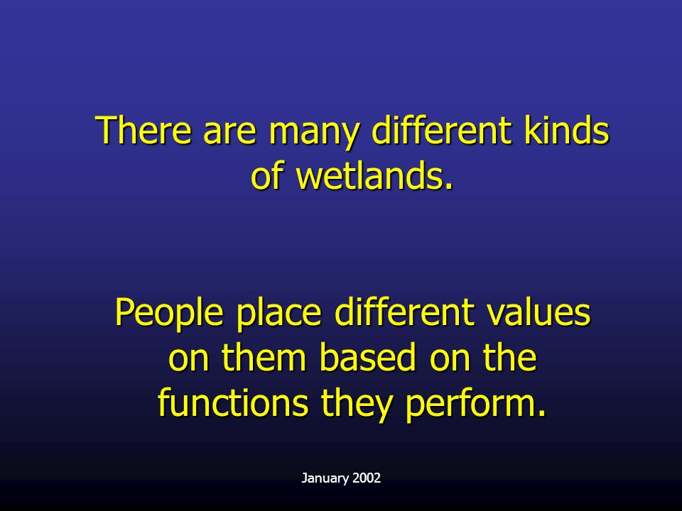 There are many different kinds of wetlands.