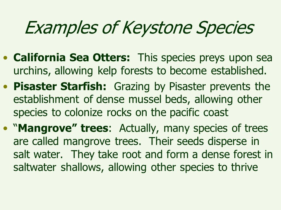 Example Of Keystone Species Choice Image Example Cover Letter For