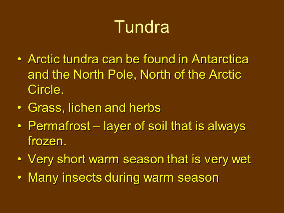 Tundra Arctic tundra can be found in Antarctica and the North Pole, North of the Arctic Circle. Grass, lichen and herbs.