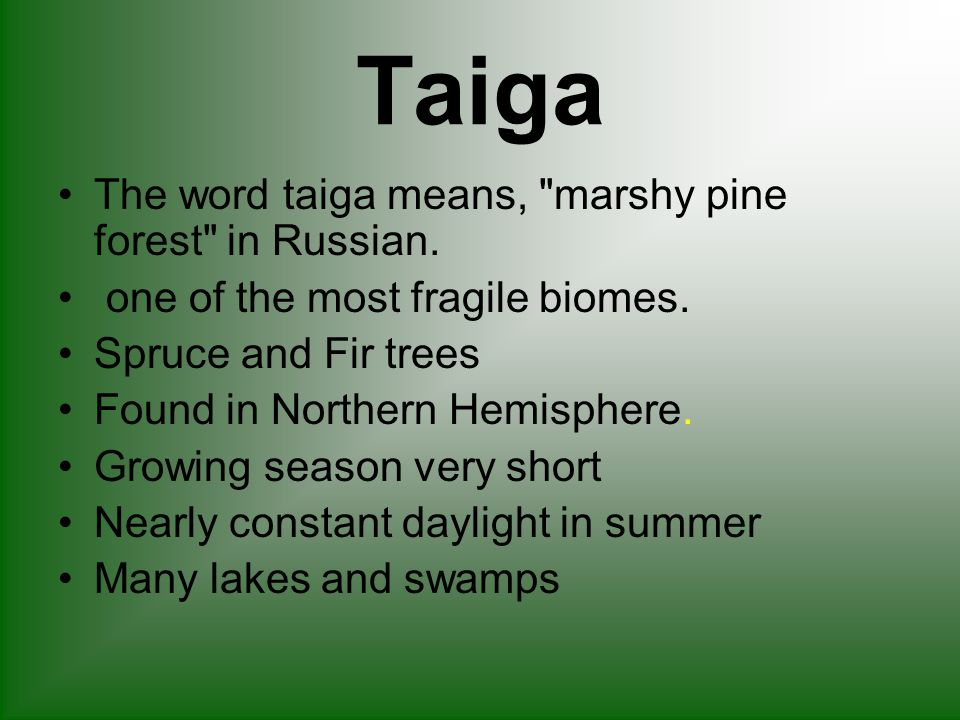 Taiga The word taiga means, marshy pine forest in Russian.