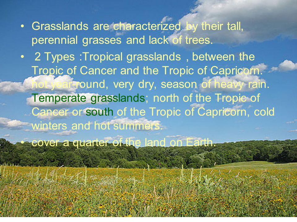 Grasslands are characterized by their tall, perennial grasses and lack of trees.