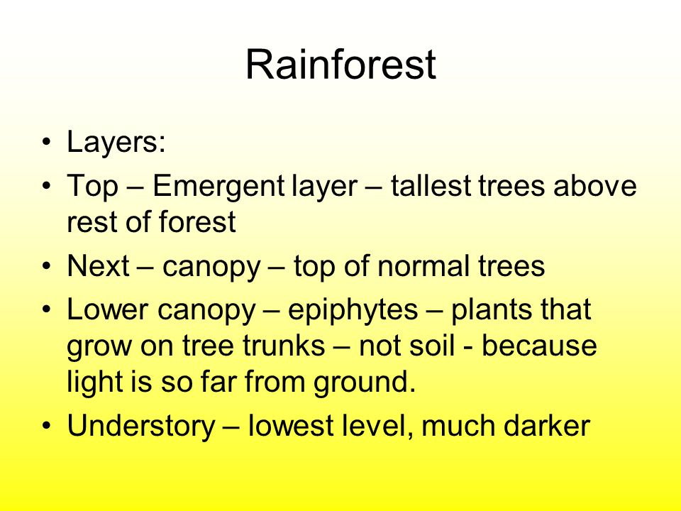 Rainforest Layers: Top – Emergent layer – tallest trees above rest of forest. Next – canopy – top of normal trees.