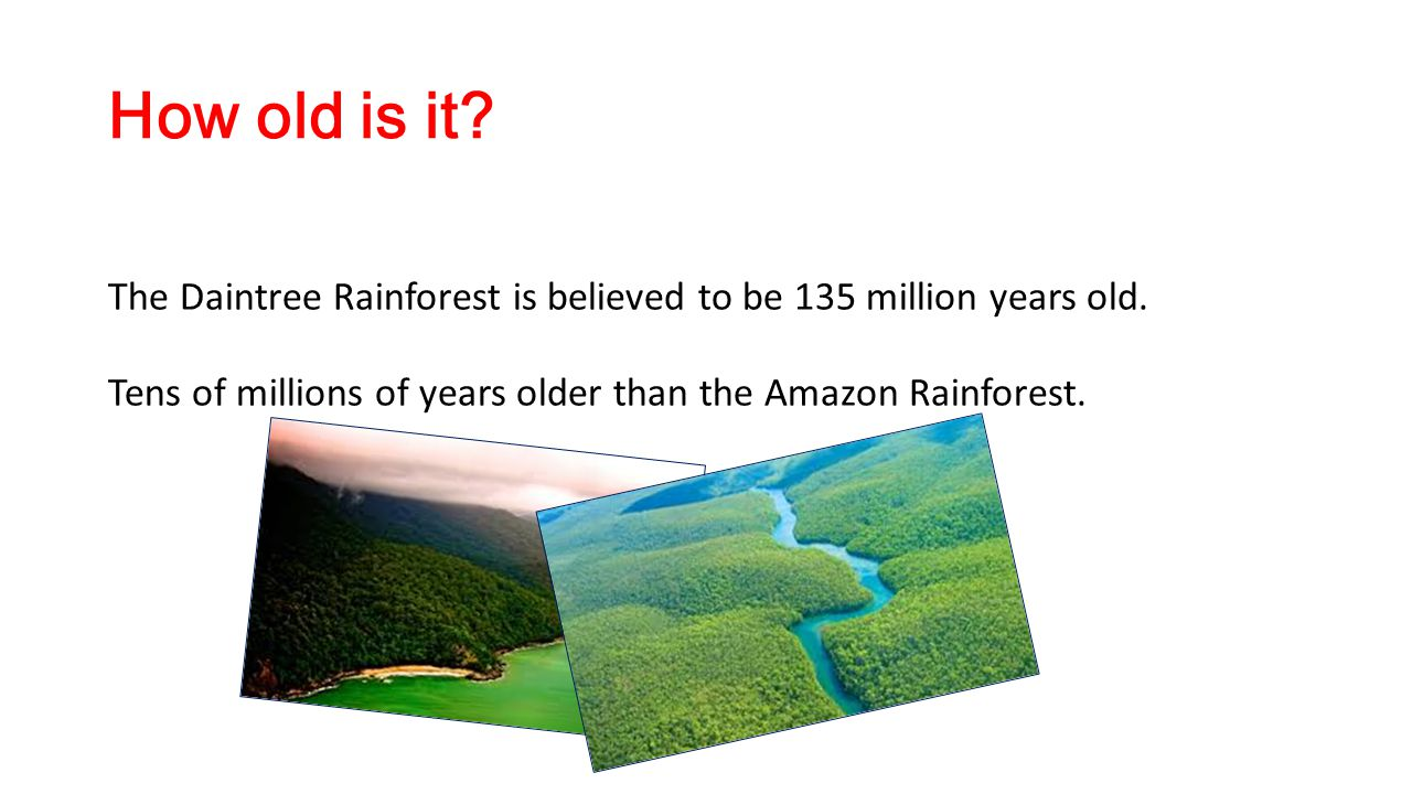 How old is it. The Daintree Rainforest is believed to be 135 million years old.