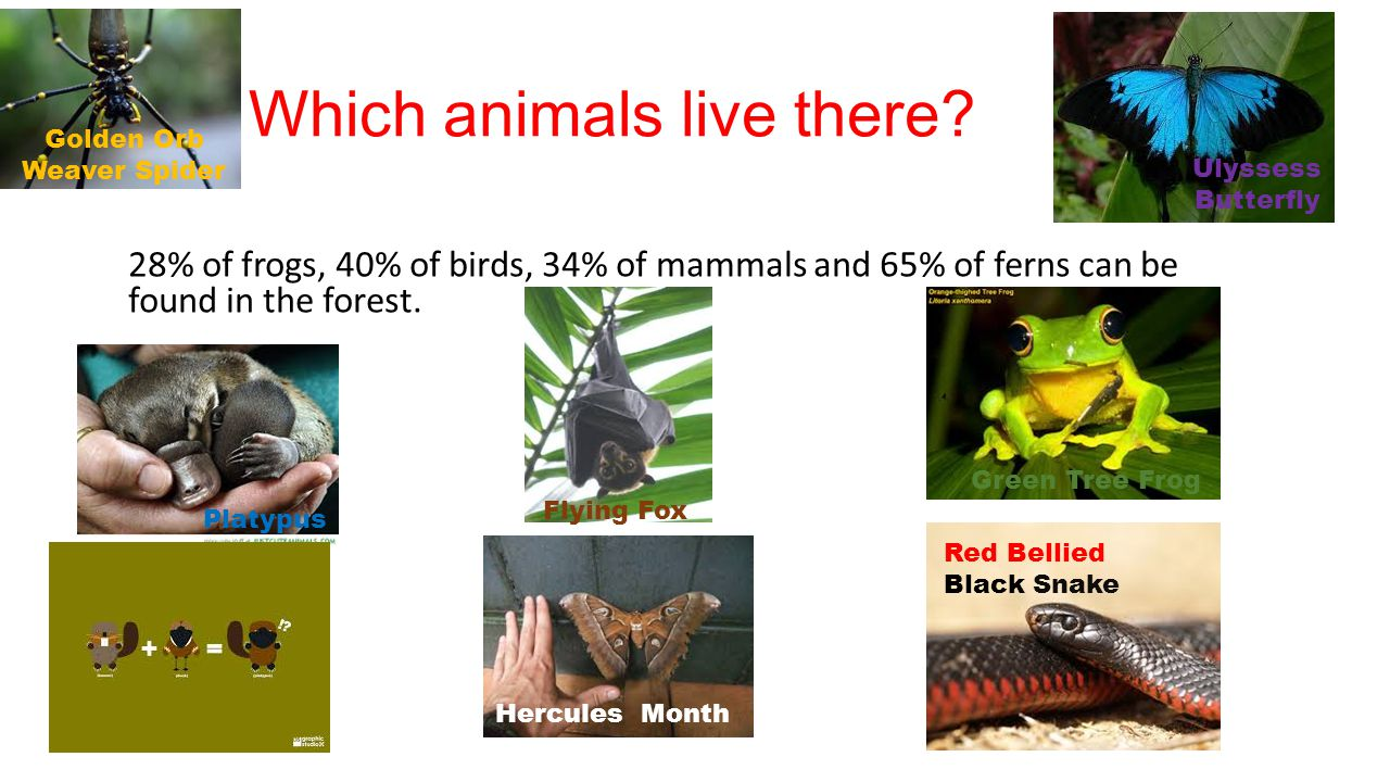 Which animals live there