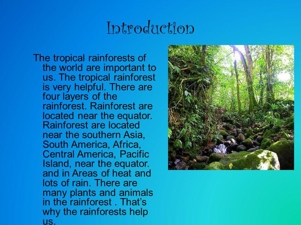 equatorial forest