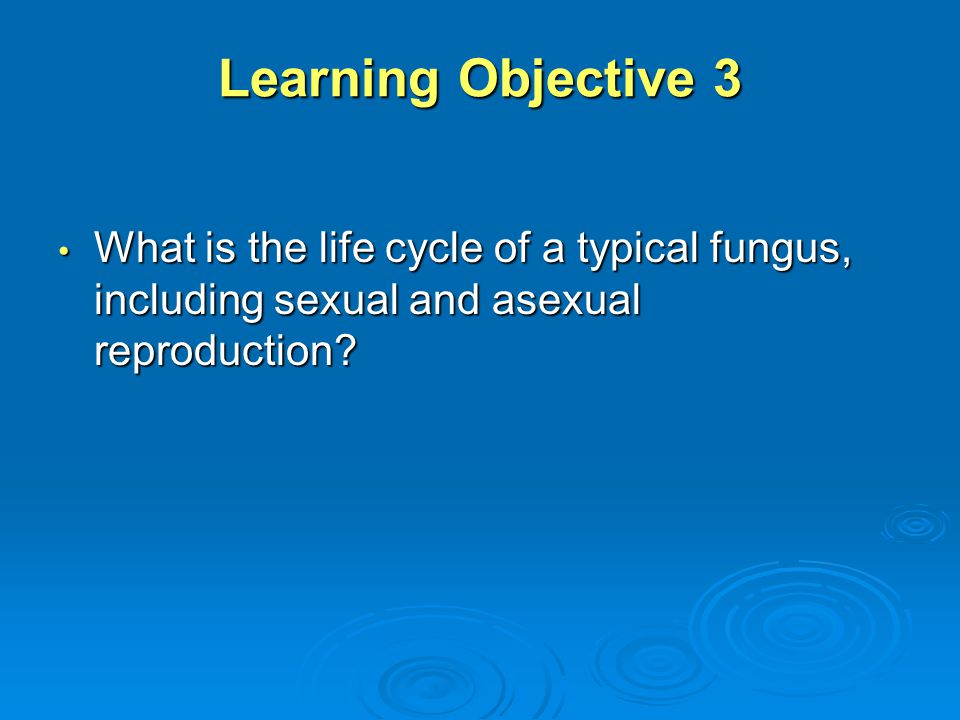 Learning Objective 3 What is the life cycle of a typical fungus, including sexual and asexual reproduction