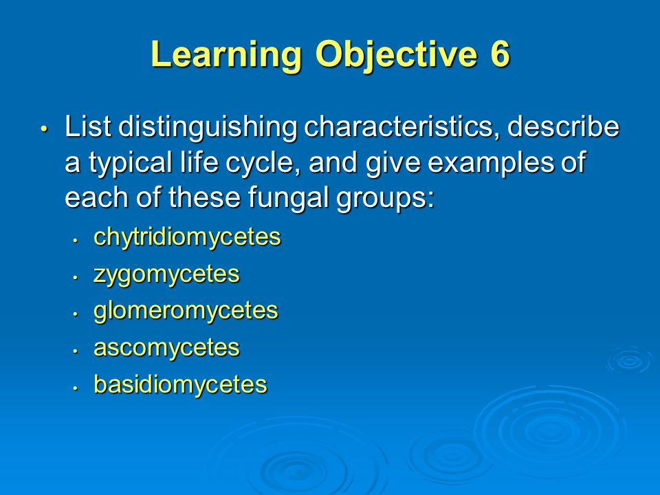 Learning Objective 6 List distinguishing characteristics, describe a typical life cycle, and give examples of each of these fungal groups: