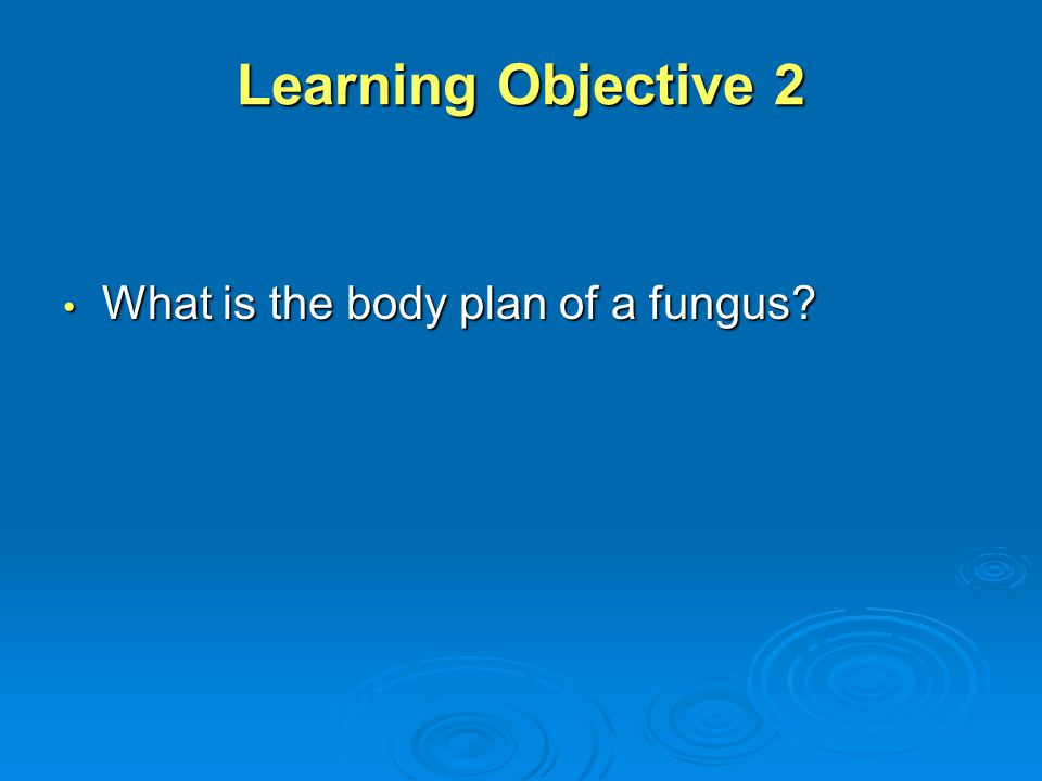 Learning Objective 2 What is the body plan of a fungus