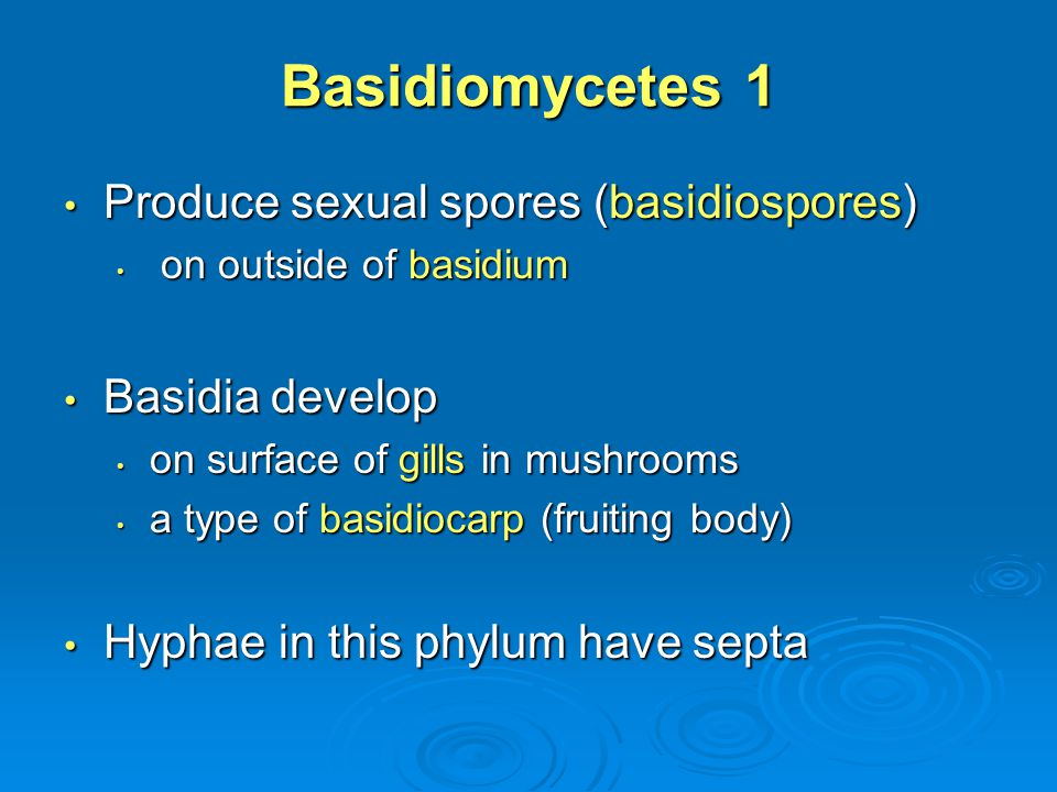 Basidiomycetes 1 Produce sexual spores (basidiospores) Basidia develop