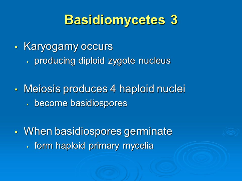Basidiomycetes 3 Karyogamy occurs Meiosis produces 4 haploid nuclei