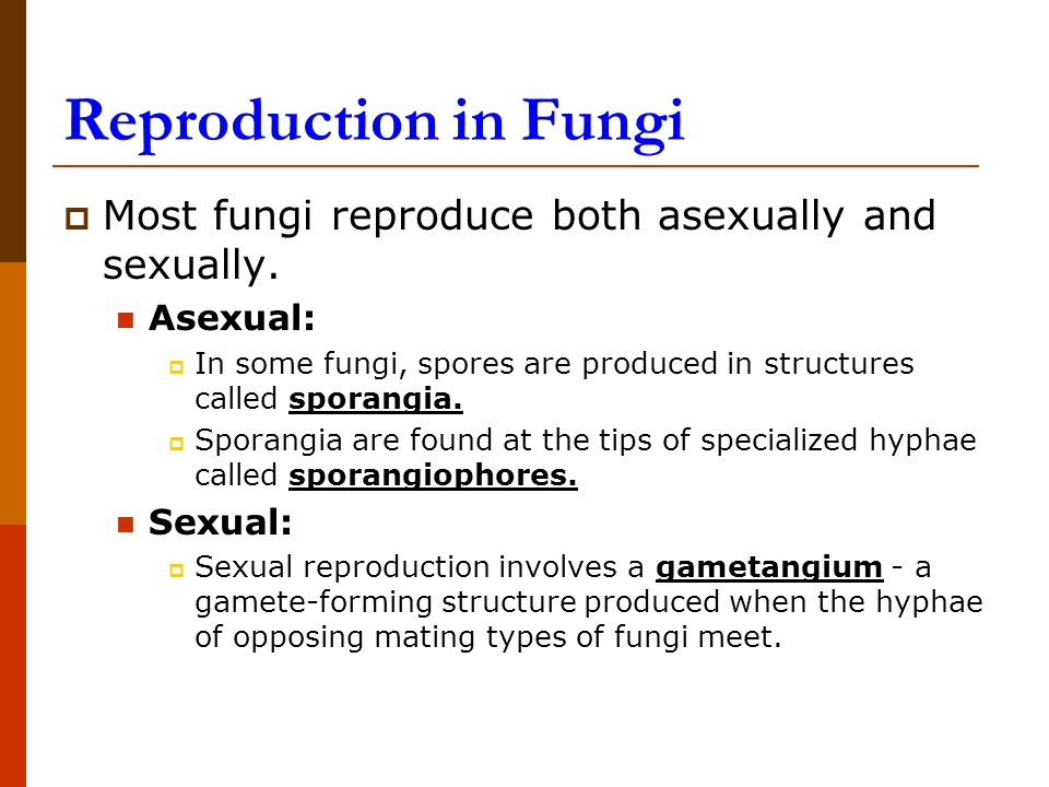 Asexual reproduction of fungi by means of spores