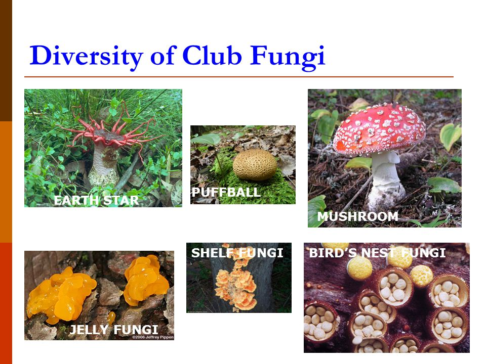 Examples Of Fungi Images Example Cover Letter For Resume