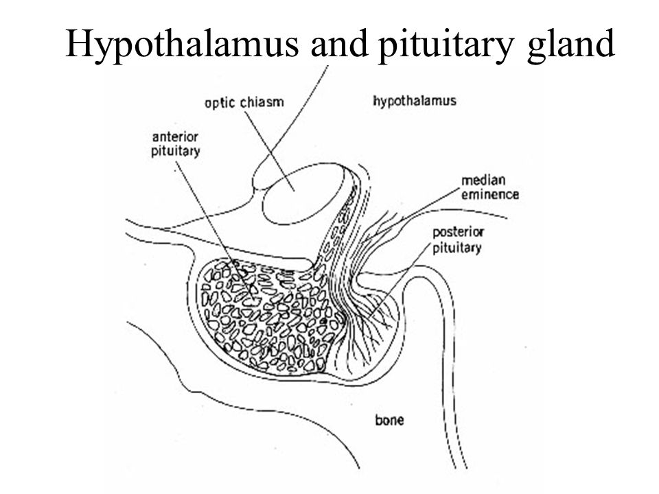Hypothalamus And Pituitary Ppt Download