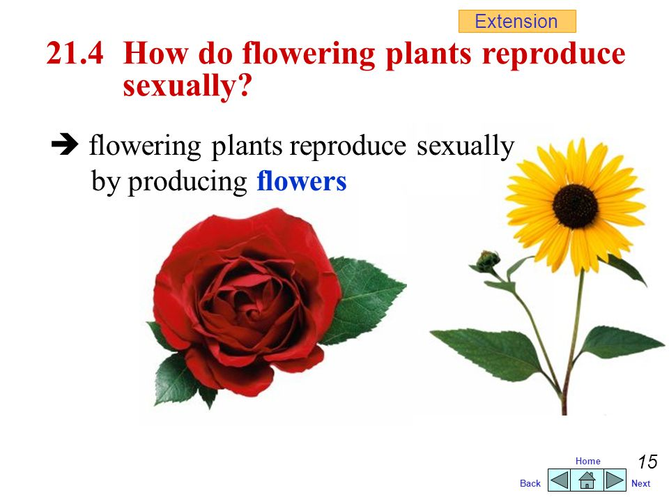 Types of flowers that reproduce sexually