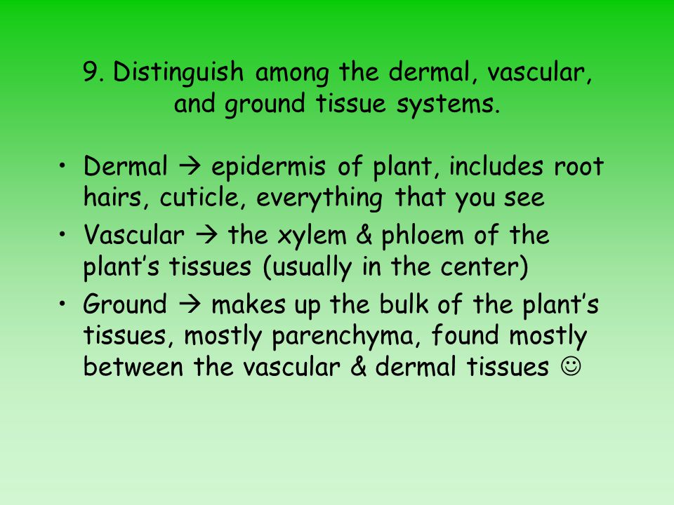 9. Distinguish among the dermal, vascular, and ground tissue systems.