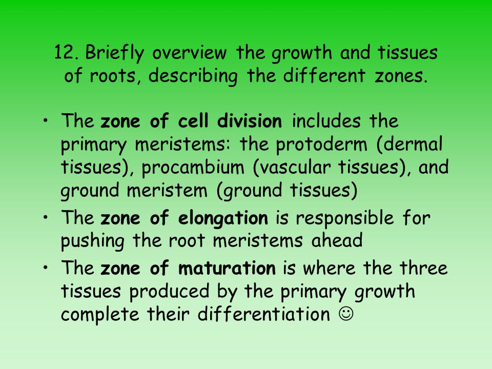 12. Briefly overview the growth and tissues of roots, describing the different zones.