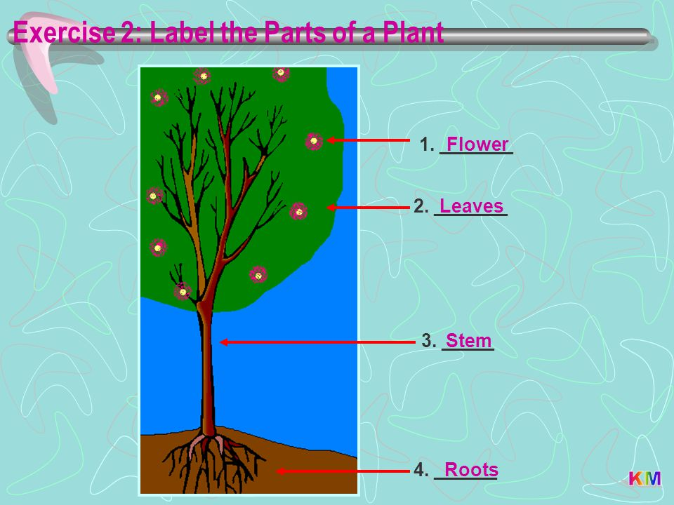 Exercise 2: Label the Parts of a Plant