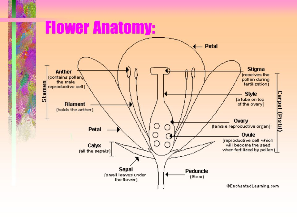 Nomenclature and Anatomy of Flowers - ppt video online download