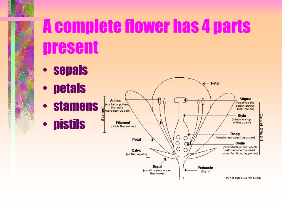 Nomenclature And Anatomy Of Flowers Ppt Video Online Download