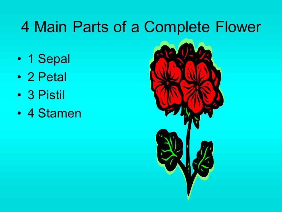 4 Main Parts of a Complete Flower