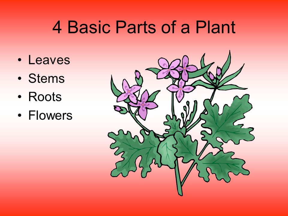 4 Basic Parts of a Plant Leaves Stems Roots Flowers