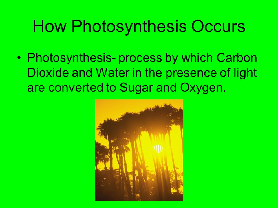 How Photosynthesis Occurs