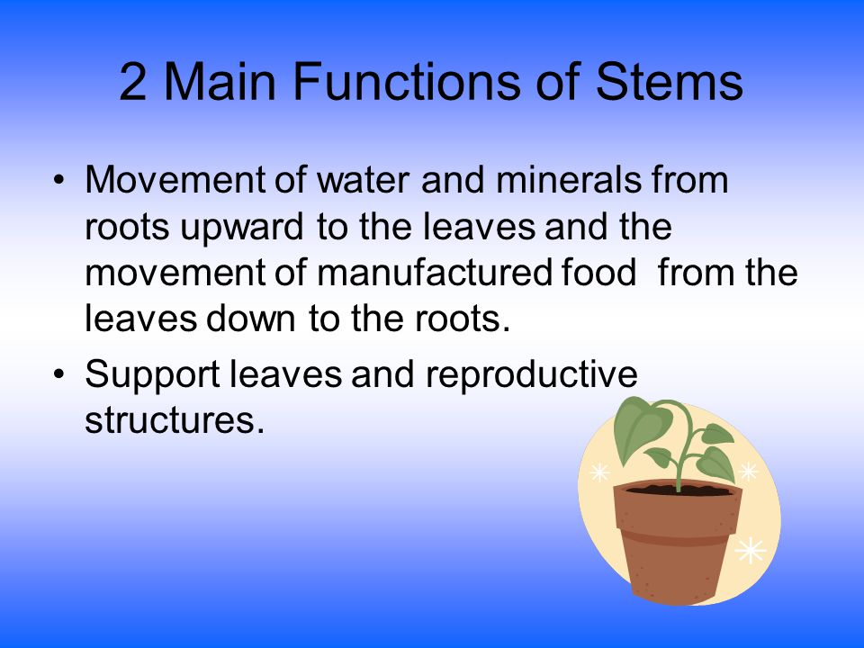 2 Main Functions of Stems