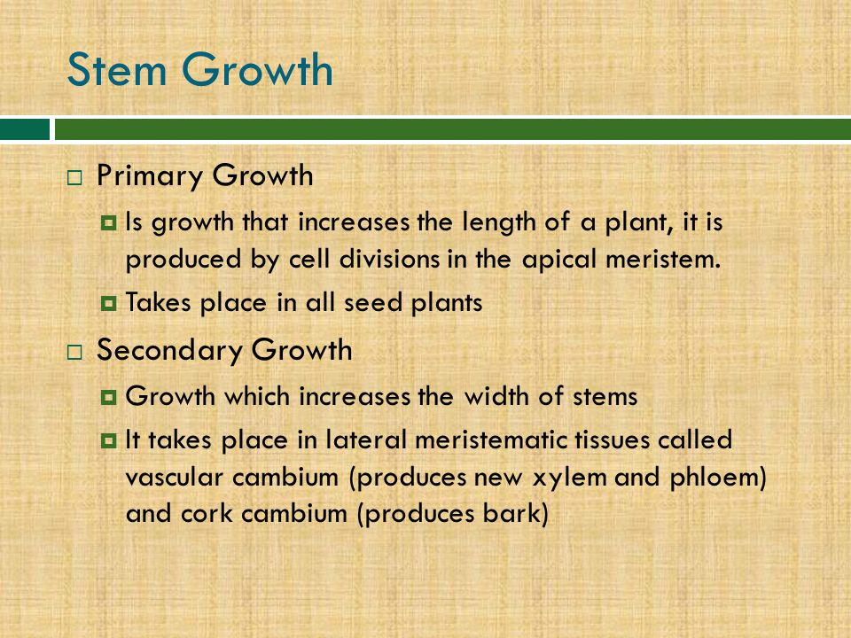Stem Growth Primary Growth Secondary Growth