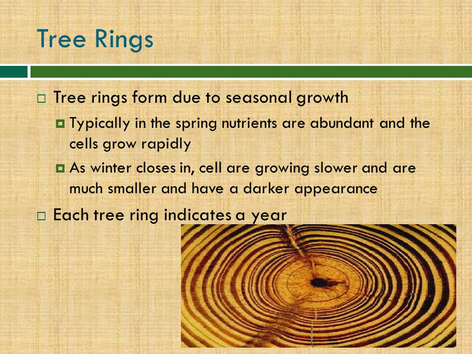 Tree Rings Tree rings form due to seasonal growth