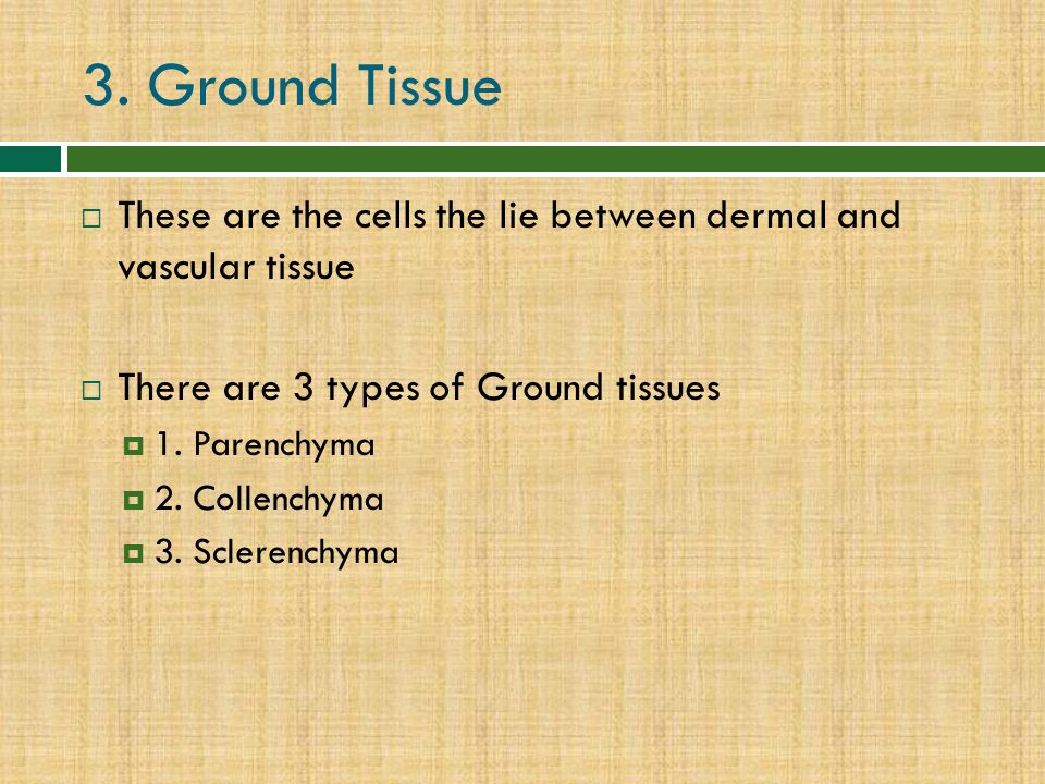 3. Ground Tissue These are the cells the lie between dermal and vascular tissue. There are 3 types of Ground tissues.