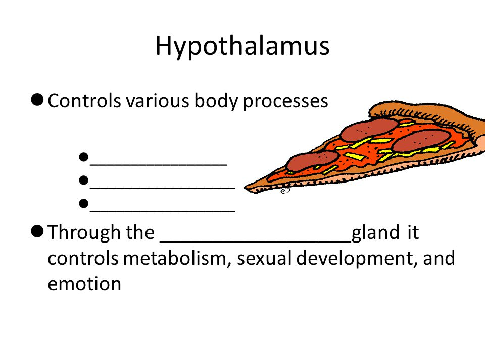 Hypothalamus Controls various body processes