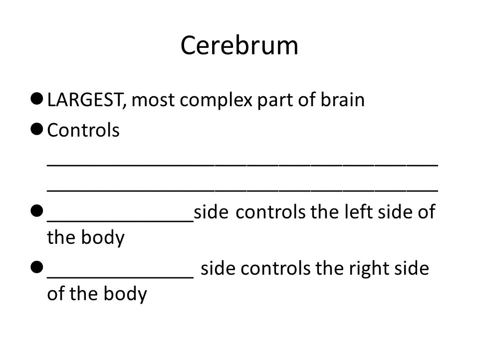 Cerebrum LARGEST, most complex part of brain
