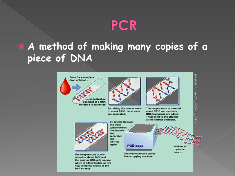 PCR A method of making many copies of a piece of DNA