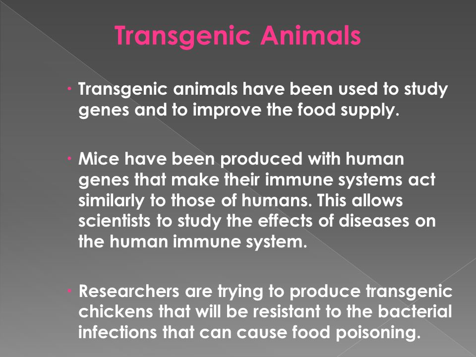 Transgenic Animals Transgenic animals have been used to study genes and to improve the food supply.