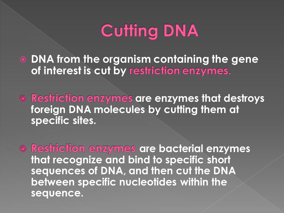 Cutting DNA DNA from the organism containing the gene of interest is cut by restriction enzymes.