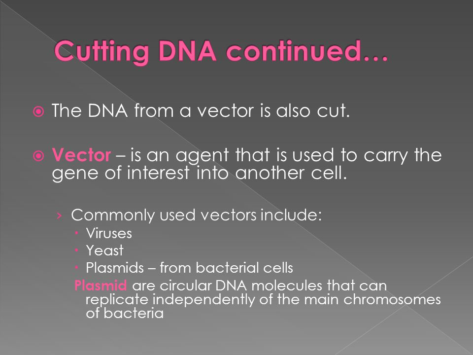 Cutting DNA continued…
